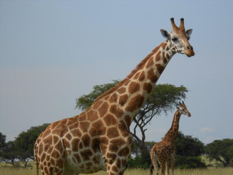 UGANDA 111_800x600
