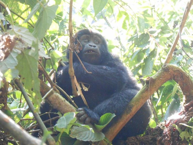 UGANDA 443_800x600