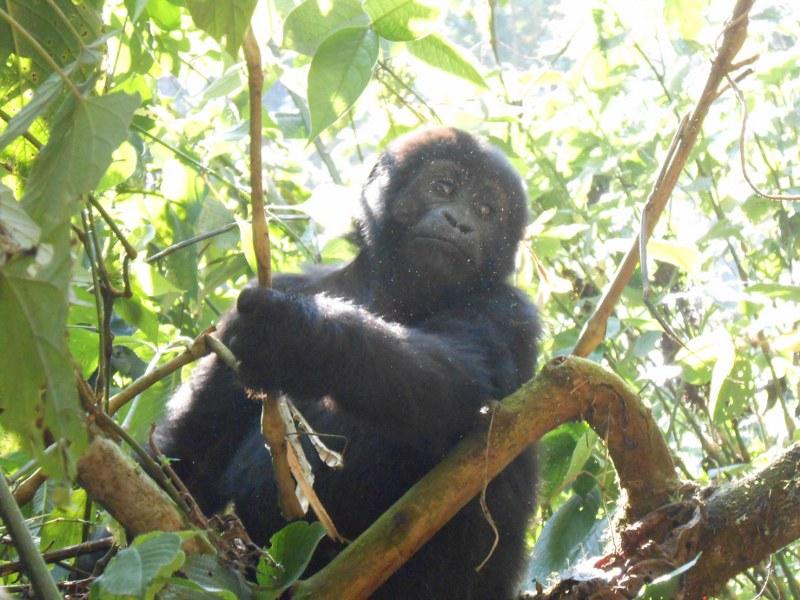 UGANDA 444_800x600