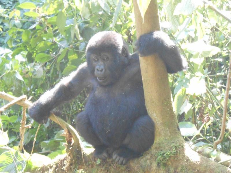 UGANDA 454_800x600