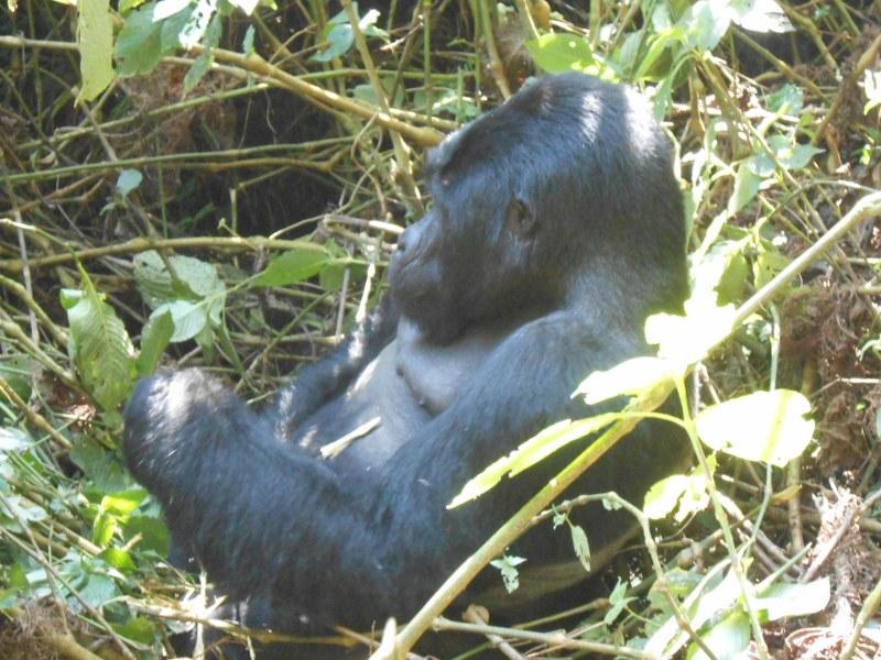 UGANDA 462_800x600