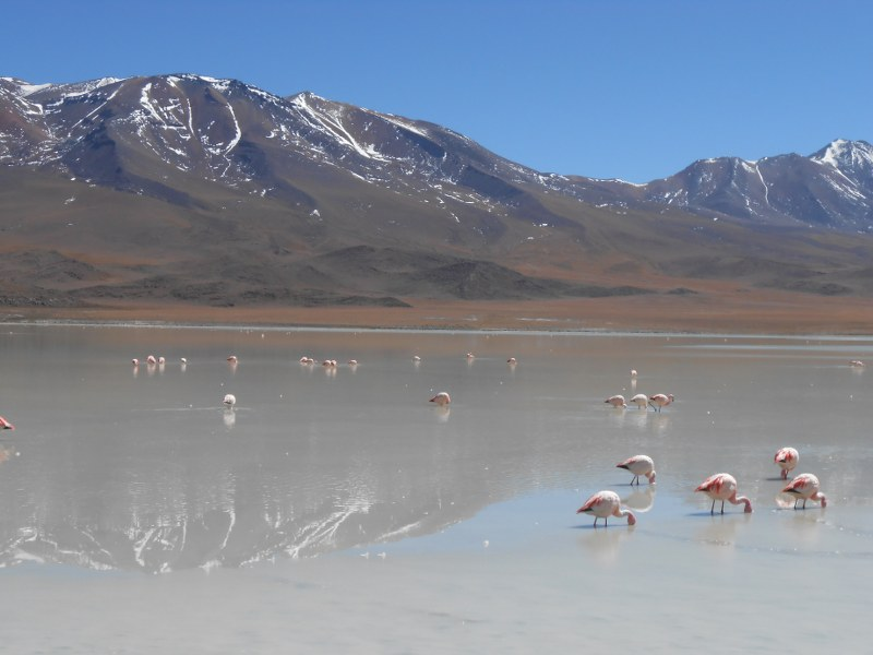 BOLIVIA CILE ISOLA DI PASQUA 529_800x600