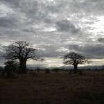 TANZANIA LUCA 008_800x600