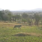 TANZANIA LUCA 382_800x600