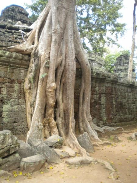 cambogia-vietnam 070_450x600