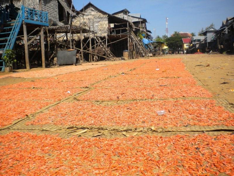 cambogia-vietnam 159_800x600