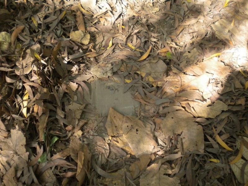 cambogia-vietnam 352_800x600