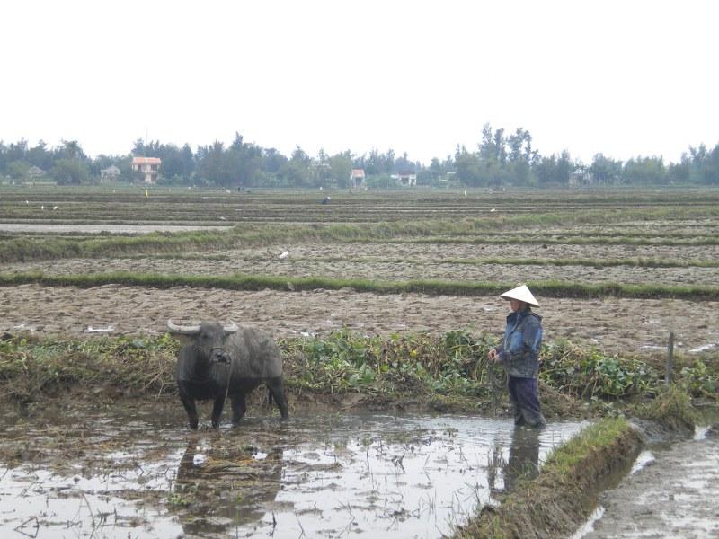 cambogia-vietnam 456_800x600