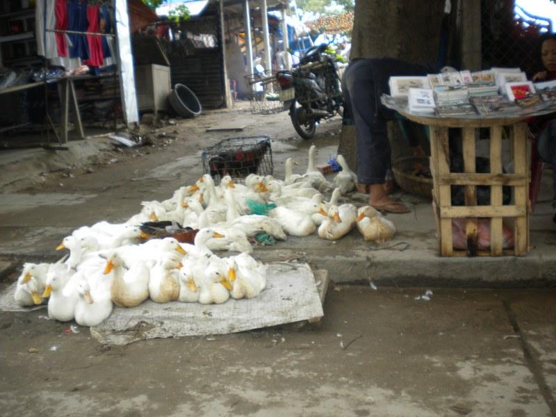 cambogia-vietnam 469_800x600