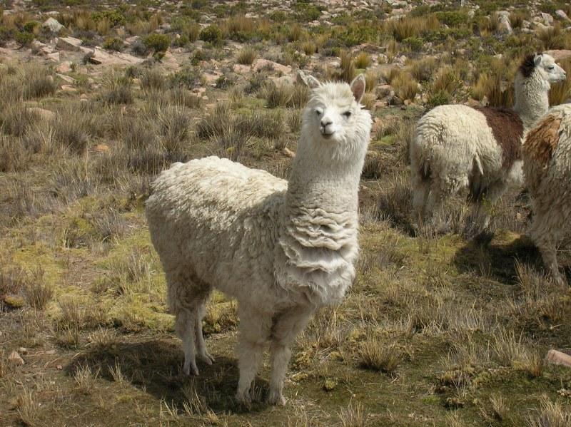 perù 2006 200_800x599