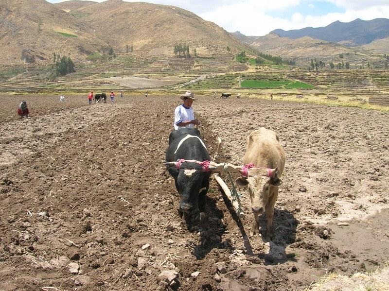 perù 2006 240_800x599