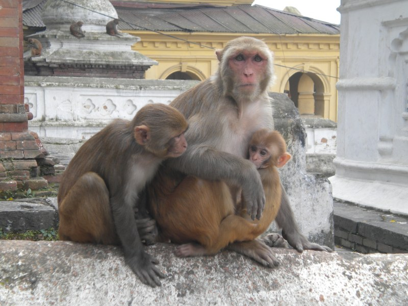 nepal-india 155_800x600