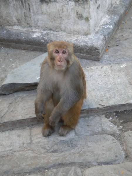 nepal-india 270_450x600