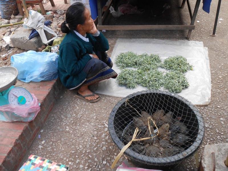 THAI-LAOS 204_800x600