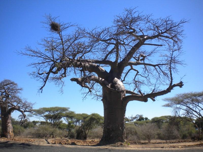 africa 153_800x600