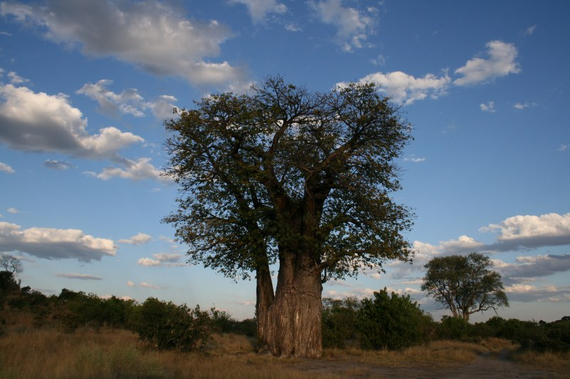 africa REFLEX 137_800x533