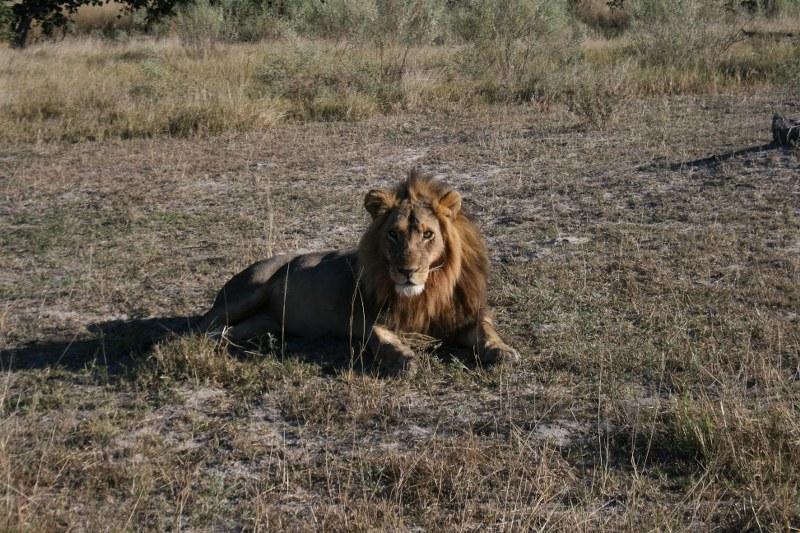 africa REFLEX 210_800x533