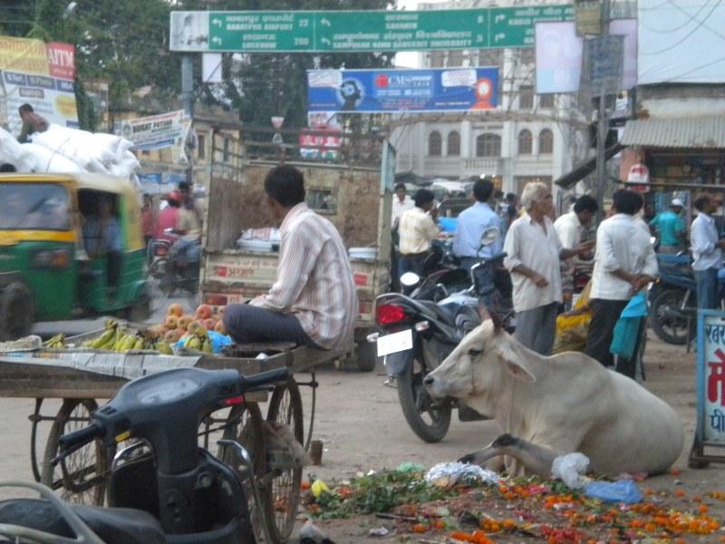 nepal-india 548_800x600